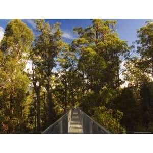 Airwalk, Tahune Forest Reserve, Tasmania, Australia