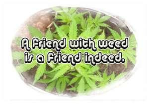 MARIJUANA WHITE WIDOW T SHIRT Pot Ganja Weed Plant NEW