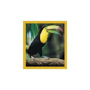 New Magnetic Bookmark Toucan High Quality Modern Design