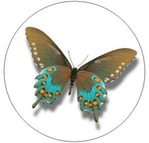 BROWN & TURQUOISE BUTTERFLY~ 1 Sticker / Seal Labels