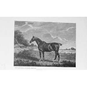 BailyS Magazine 1898 Hunter Sire Cognac Sport Print Home