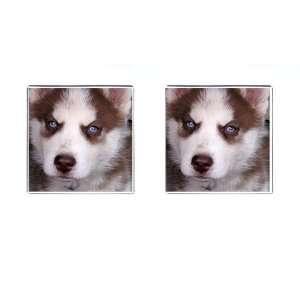 Siberian Husky Puppy Dog 17 Square Cufflinks F0631