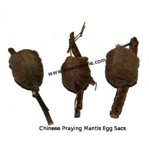 Set of 3 Praying Mantis Egg Cases: Patio, Lawn & Garden